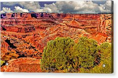 The Grand Canyon Dead Horse Point Acrylic Print by Bob and Nadine Johnston