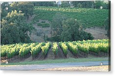Acrylic Print featuring the photograph The Grape Lines by Shawn Marlow