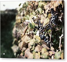 The Grapevines Acrylic Print by Lisa Russo