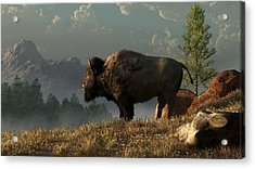 The Great American Bison Acrylic Print by Daniel Eskridge