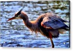 The Great Blue Heron Acrylic Print