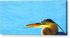 The Great One - Blue Heron By Sharon Cummings Acrylic Print by Sharon Cummings