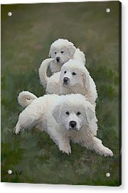 The Great Pyranise Pups  Acrylic Print by Bonnie Willis