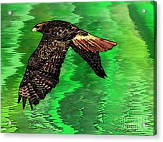 The Great Red Hawk  Acrylic Print by Mario Perez
