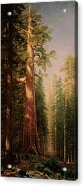 The Great Trees Mariposa Grove California Acrylic Print by Albert Bierstadt