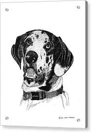 The Greatest Dane Acrylic Print by Jack Pumphrey