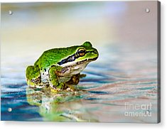The Green Frog Acrylic Print by Robert Bales