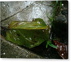 The Green Leaf Acrylic Print by Lee Farley