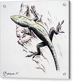 The Green Lizard Acrylic Print by Katharina Filus