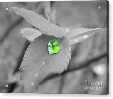 The Green Pearl Acrylic Print by Patti Whitten