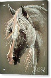 The Grey Horse Soft Pastel Acrylic Print by Angel  Tarantella