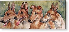 The Greyhounds Acrylic Print by Maria's Watercolor