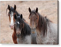 The Greys Acrylic Print by Vinnie Oakes