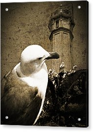 The Gull Acrylic Print