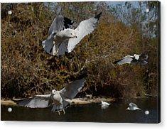 The Gulls Acrylic Print