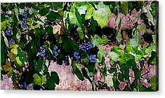 The Harvest Line I Acrylic Print by Ken Evans