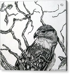 Acrylic Print featuring the drawing The Hawk by Alison Caltrider
