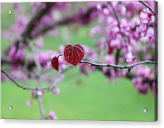 The Heart Grows Acrylic Print