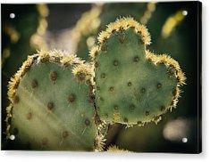 The Heart Of A Cactus  Acrylic Print