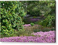 Acrylic Print featuring the photograph The Heather Path by Sabine Edrissi