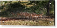 Acrylic Print featuring the photograph The Heram by Joseph G Holland