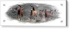 The Herd Is Coming Acrylic Print by Judy Deist