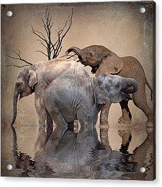 The Herd Acrylic Print by Sharon Lisa Clarke