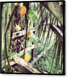 The Hidden Fence Acrylic Print by Chasity Johnson