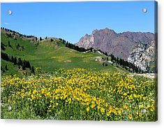 The Hills Are Alive Acrylic Print