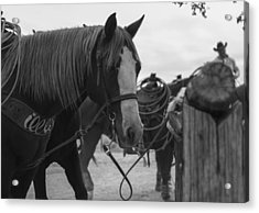 Acrylic Print featuring the photograph The Hitching Post by Amber Kresge