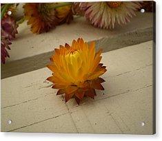 The Holy Flower Acrylic Print by Fabian Cardon