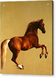 Acrylic Print featuring the digital art The Horse by George Stubbs