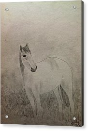 The Horse Acrylic Print by Noah Burdett