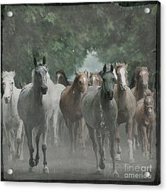 The Horsechestnut Tree Avenue Acrylic Print by Angel  Tarantella