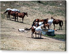 The Horses Of Placerville Acrylic Print
