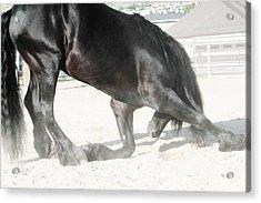 The Horse's Respect Acrylic Print