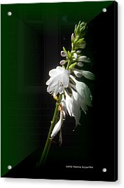 The Hosta Flowers Acrylic Print by Patricia Keller