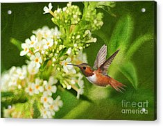 The Hummer And The Butterfly Bush Acrylic Print by Darren Fisher