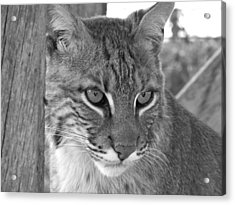 The Hunter Black And White Acrylic Print by Jennifer  King