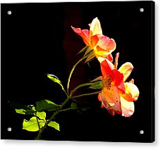 The Illuminated Rose Acrylic Print