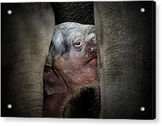The Immemorial Knowledge Of The Newborns Acrylic Print