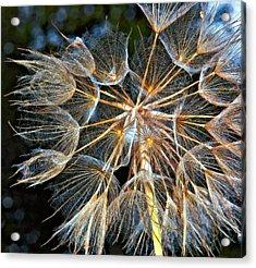 The Inner Weed Oil Acrylic Print by Steve Harrington