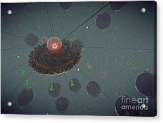 The Interior Of An Eukaryotic Cell Acrylic Print by Stocktrek Images