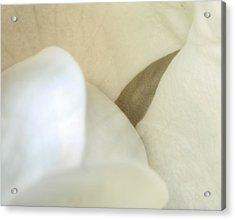 The Intimacy Of The Magnolia Acrylic Print