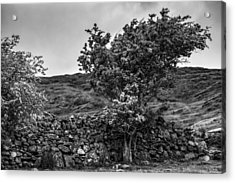 Acrylic Print featuring the photograph The Irish Wall And The Tree by Juergen Klust