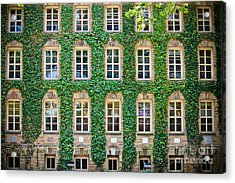 The Ivy Walls Acrylic Print