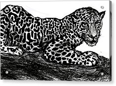 The Jaguar  Acrylic Print