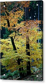 The Joy Of Being In Autumn Acrylic Print by Mah FineArt
