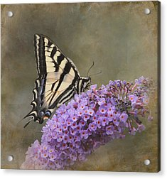 The Joy Of Nectar Acrylic Print by Angie Vogel
