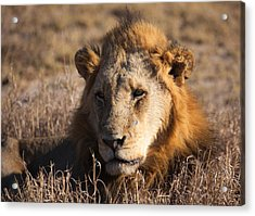 The King Acrylic Print by Craig Brown